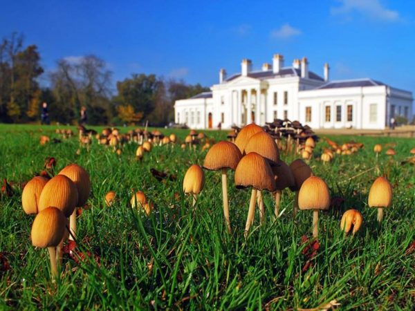35603-hylands-house-and-park-chelmsford-01