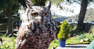Lake District owl